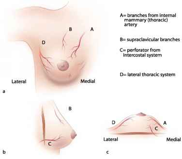 Breast Innervation