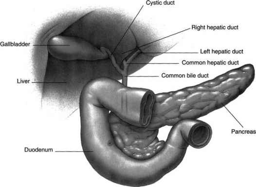 How The Gallbladder Tested