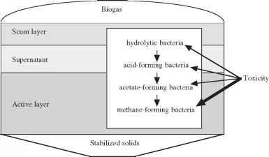 Toxicity - Wastewater Bacteria - Kelmac Medical